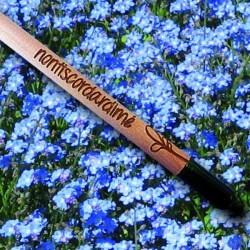 Sprout MATITA in legno CHE SI PIANTA capsula CON SEME per far crescere una pianta di NONTISCORDARDIME'