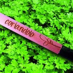 Sprout MATITA in legno CHE SI PIANTA capsula CON SEME per far crescere una pianta di CORIANDOLO