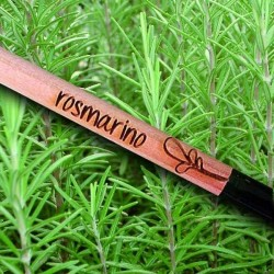 Sprout MATITA in legno CHE SI PIANTA capsula CON SEME per far crescere una pianta di ROSMARINO