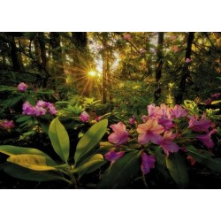 Puzzle HEYE Magic Forests RHODODENDRON 2000 pz 68,8 x 96,6 cm
