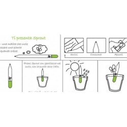 Sprout MATITA in legno CHE SI PIANTA capsula CON SEME per far crescere una pianta di GIRASOLE