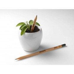 Sprout MATITA in legno CHE SI PIANTA capsula CON SEME per far crescere una pianta di BASILICO