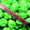 Sprout MATITA in legno CHE SI PIANTA capsula CON SEME per far crescere una pianta di PEPERONE VERDE