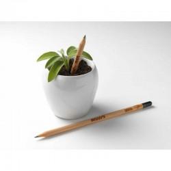 Sprout MATITA in legno CHE SI PIANTA capsula CON SEME per far crescere una pianta di SWEET PEA