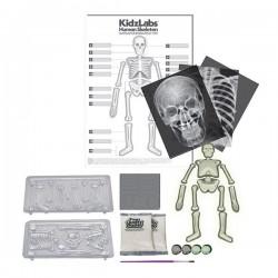 SCHELETRO UMANO fosforescente GLOW HUMAN SKELETON kit scientifico 4M kidz labs set GIOCO età 8+