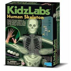 SCHELETRO UMANO fosforescente GLOW HUMAN SKELETON kit scientifico 4M kidz labs set GIOCO età 8+