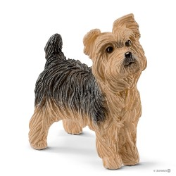 YORKSHIRE TERRIER animali...