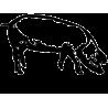 BESTIARIO REGGIANO edizione illustrata CORSIERO EDITORE giulia manenti e lucia vecchi SCHEDE IN CARTONE Corsiero editore - 2
