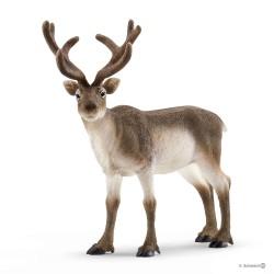 RENNA reindeer WILD LIFE...