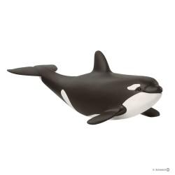 ORCA CUCCIOLO animali in...